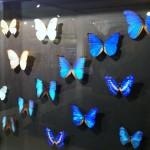 Mariposas en el Museo
