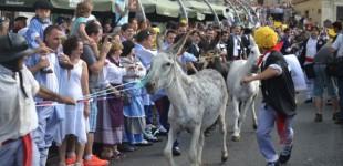 El consejo consultivo de animales pide prohibir la Carrera de Burros
