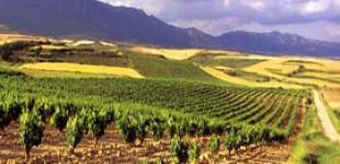 Rioja Alavesa es elegido el mejor destino turístico en Fitur