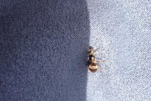 Las hormigas voladoras conquistan zabalgana y las piscinas for Piscina zabalgana