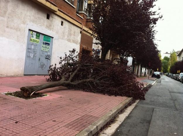 Arbol derribado por el viento en Pablo Uranga