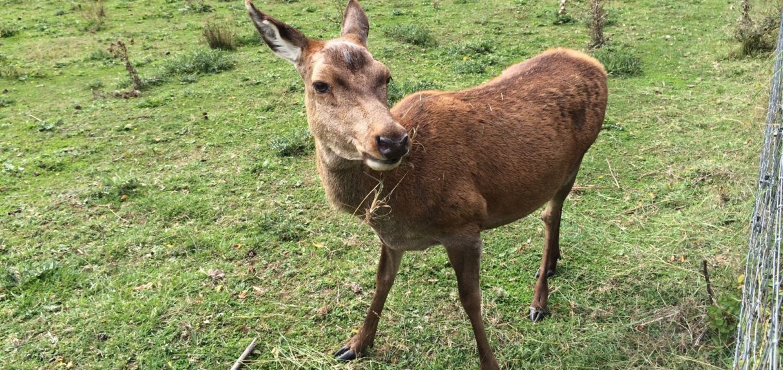 La Diputación protege a los ciervos del Gorbea durante la berrea