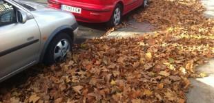 Las hojas sin recoger amenazan con provocar caídas y balsas de agua