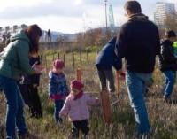 Los vitorianos plantarán el domingo 2.500 árboles en Zabalgana