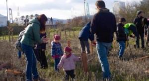 Plantación en el Anillo Verde (Fuente: Ayuntamiento de Vitoria-Gasteiz)