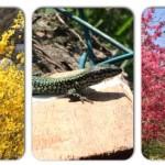 Primavera en Vitoria
