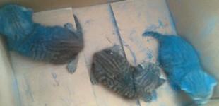 Rescatan a 4 gatitos que estaban en una caja con pintura abrasiva