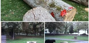 El Ayuntamiento tala tres grandes árboles del Parque del Prado