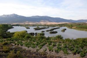 laguna laguardia
