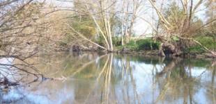 Zadorra Bizirik denuncia la mala conservación de los ríos alaveses