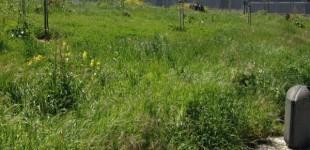 Parcelas y alcorques comidos por la hierba