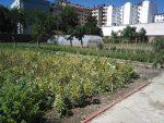 Una huerta 'secreta' de 3.500 metros cuadrados en pleno centro de Vitoria