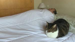 en-cama-con-gato