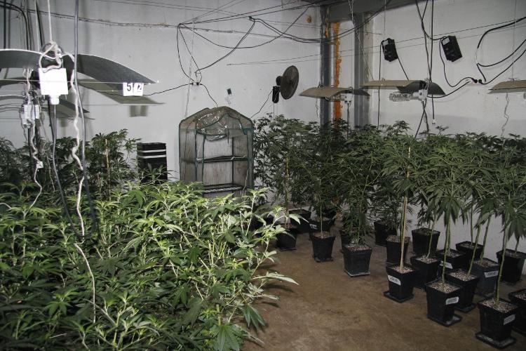 marihuana-vitoria