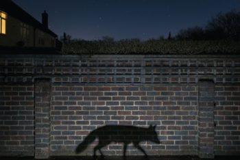 Reichard-Peters-Caminando-entre-las-sombras