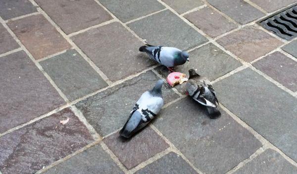 cuantas palomas hay en vitoria