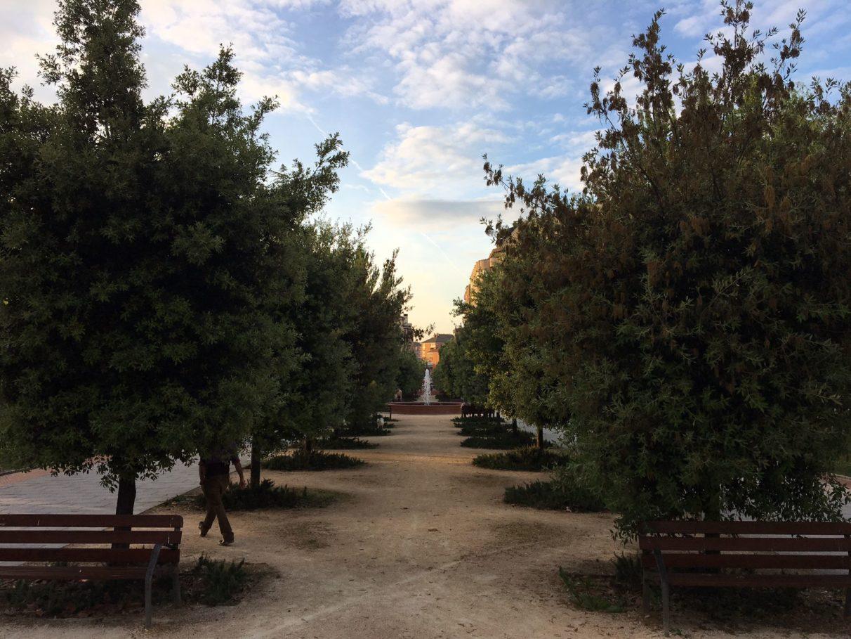 Aspecto anterior de los árboles del Parque del Norte