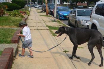 Peluquería y adiestramiento canino para los perros de Salburua