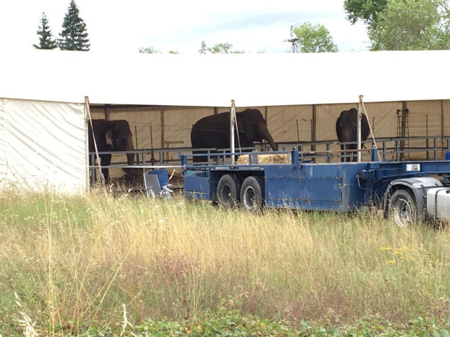 Elefantes Circo Mundial
