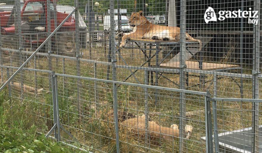 El Circo Mundial llega a Vitoria-Gasteiz con elefantes y leones