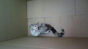 Gato en Pintoreria (@bomberoseuskadi)