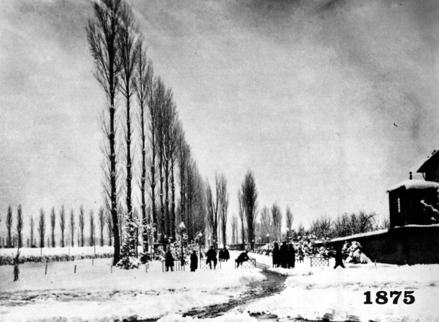 En 1875 en el Paseo de La Senda había olmos (foto cedida a Tecnigral por vecinos)
