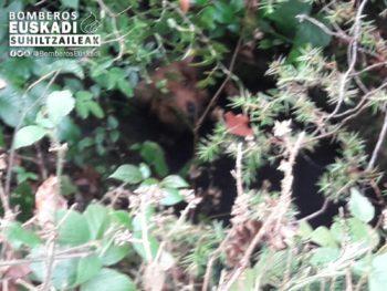 Los bomberos rescatan a un perro atrapado en una sima
