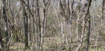 Vitoria-Gasteiz calentará sus edificios con podas y desbroces de bosques y jardines