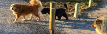 perros sueltos en el anillo verde de Vitoria