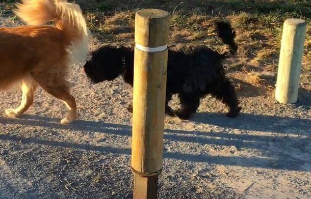 Vitoria se adapta sin problemas al decreto de zonas para perros