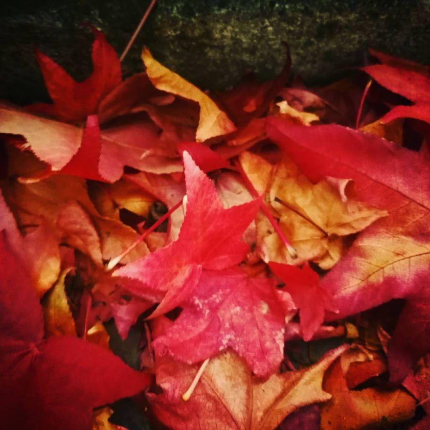 hojas-otono-vitoria