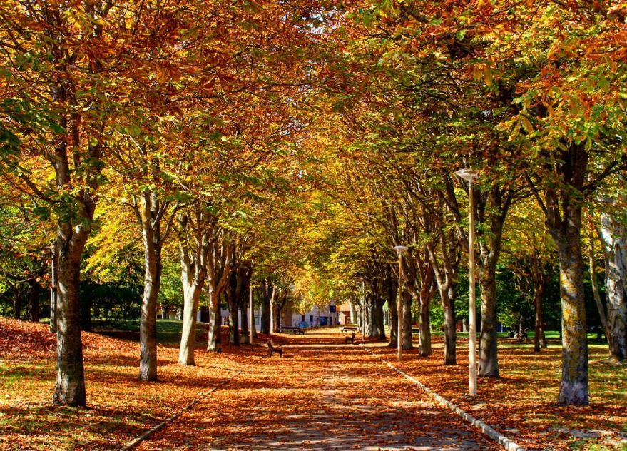 otoño-parque-las-conchas-vitoria