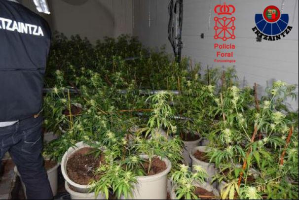 Plantación en Argandoña