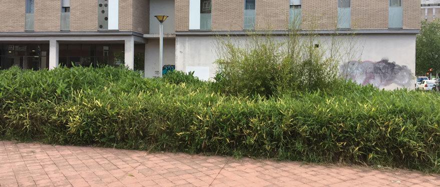 paseo de estrasburgo bambues
