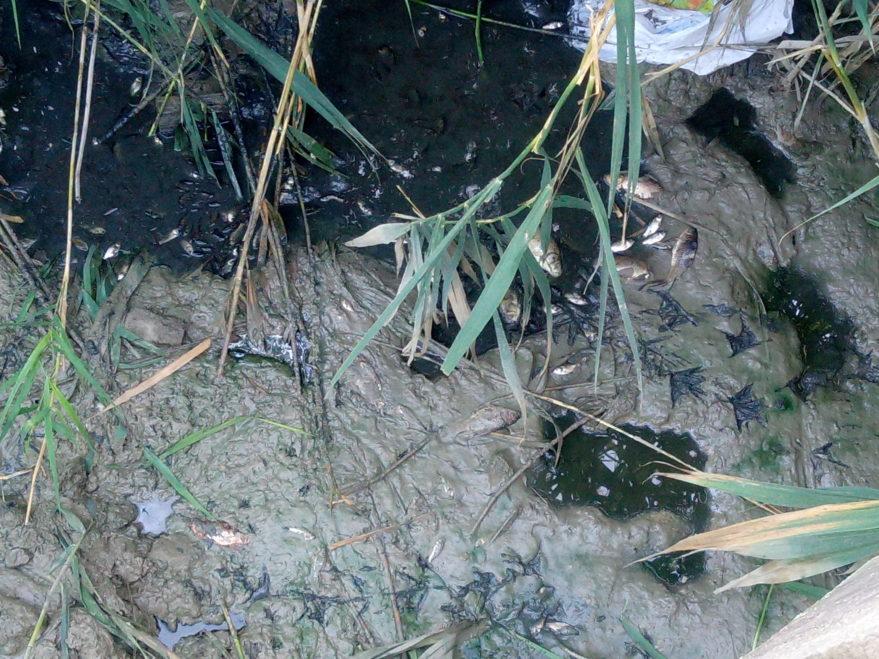 peces balsa borinbizkarra