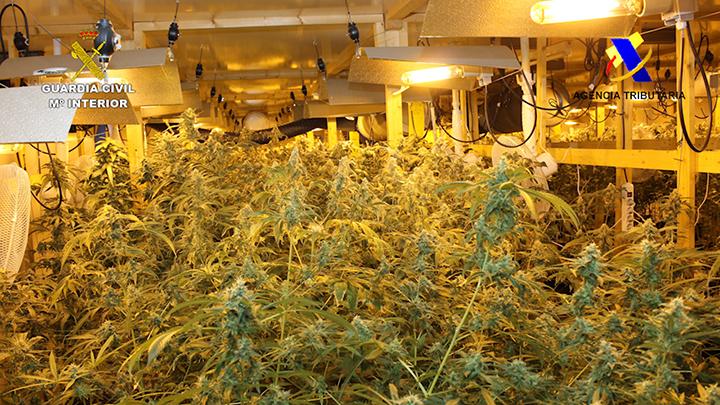 Descubren 3.000 plantas de marihuana en una nave de Legutiano