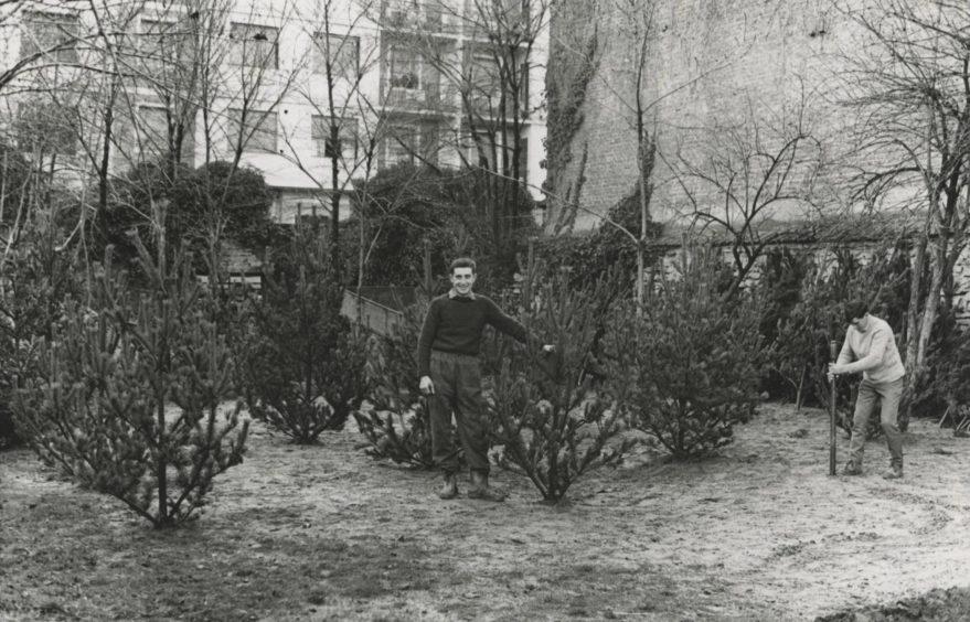 Jardin de Amarica