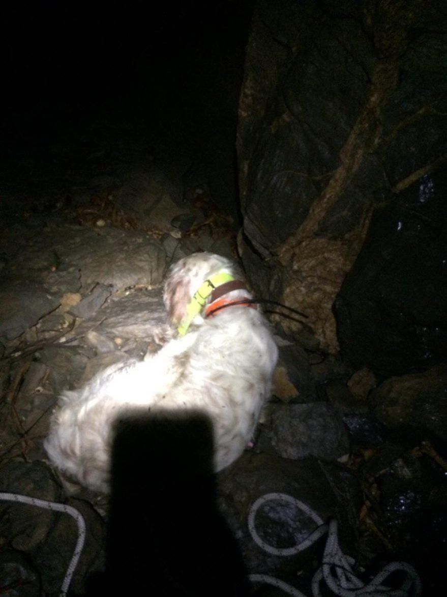 rescate perro sima badaya