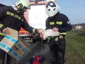 Los bomberos rescatan a una lechuza atrapada en un cable telefónico