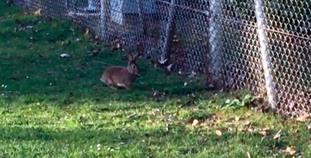 Corzo, jabalí... y conejos: fauna en Vitoria-Gasteiz