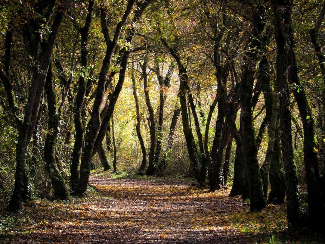 Parque Forestal de Zabalgana, Vitoria, @canononway, lugares con encanto