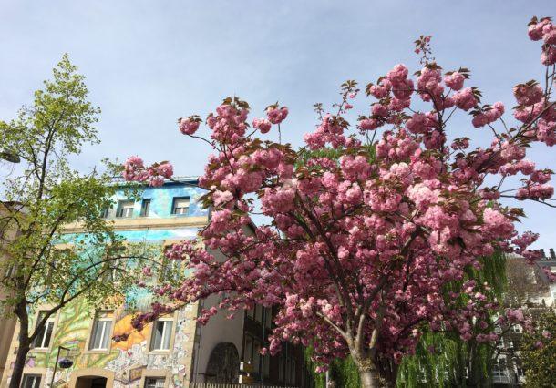 Árboles en Vitoria-Gasteiz: cuántos hay, beneficios y dificultades