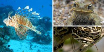 encuentro biodiversidad vitoria
