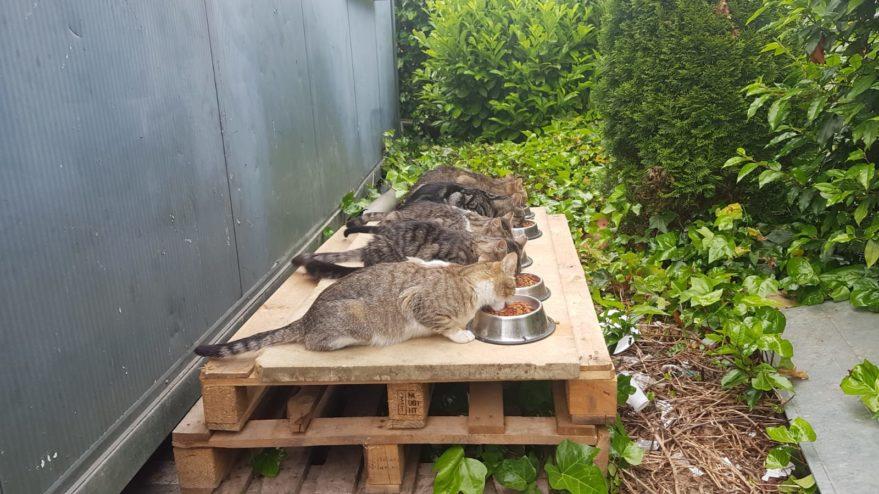 gatos callejeros vitoria