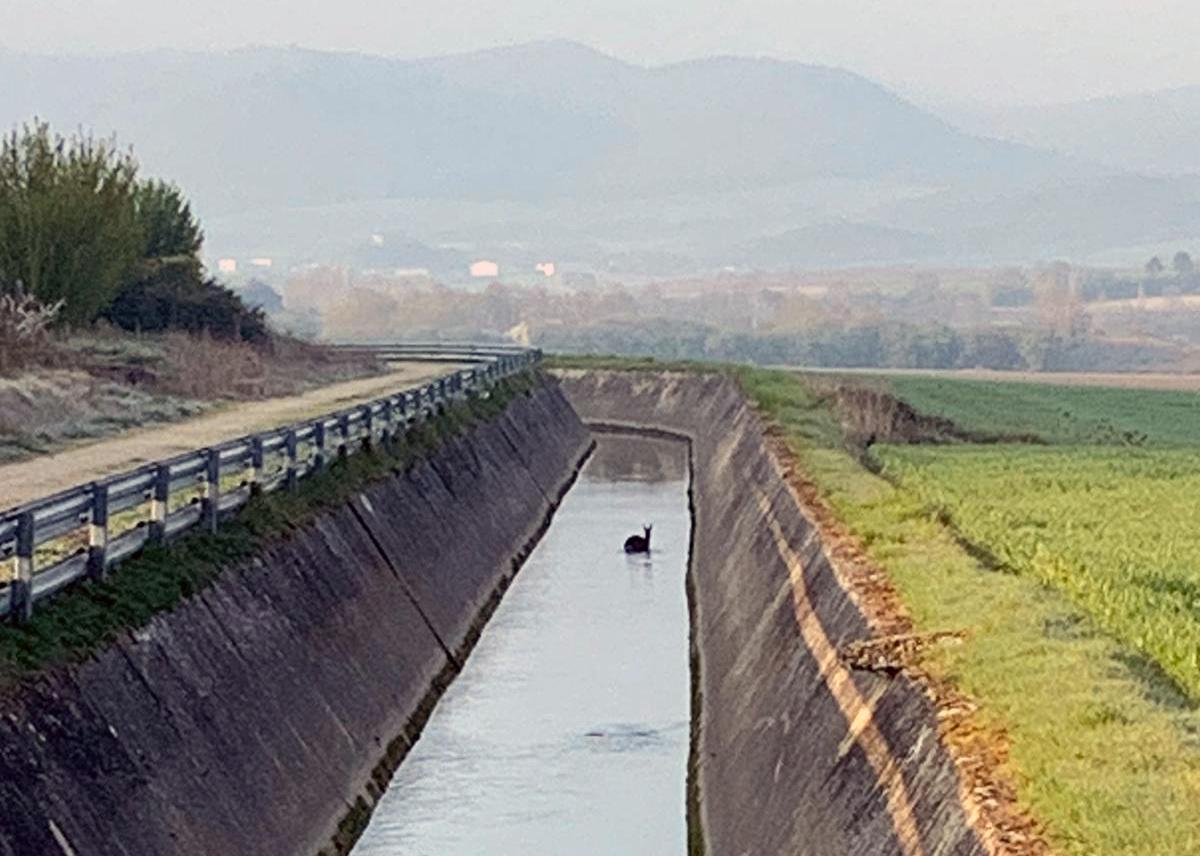 Dulantzi pide medidas en el Canal del Río Alegría para evitar las caídas de animales | Gasteiz Hoy