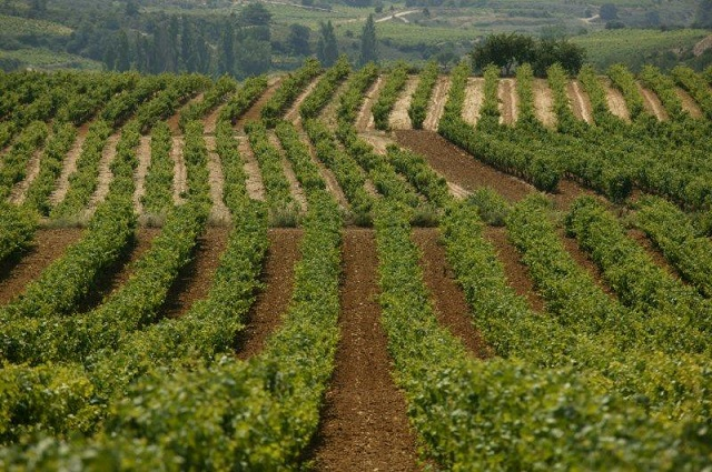 viñedos de álava
