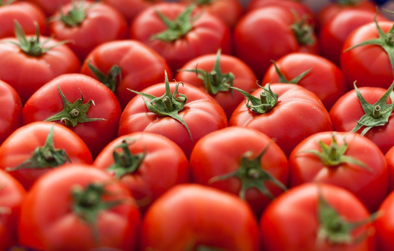tomate tuesta