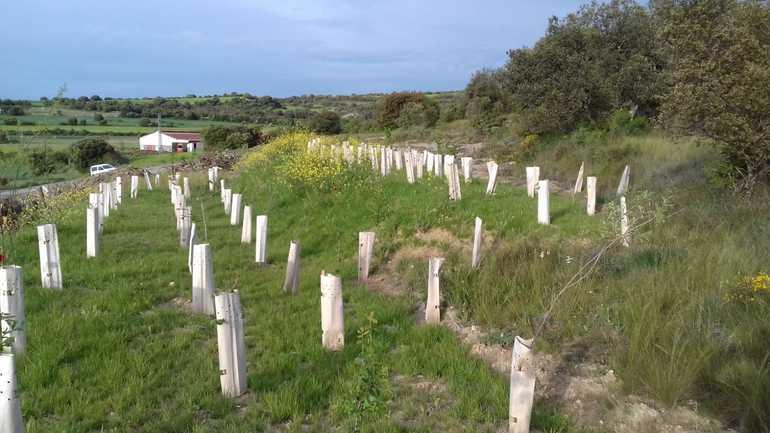 Restauración suelos Artaza-Foronda