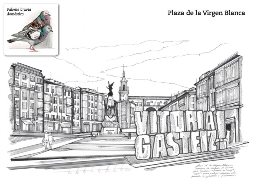 Paloma bravía- Plaza de la Virgen Blanca