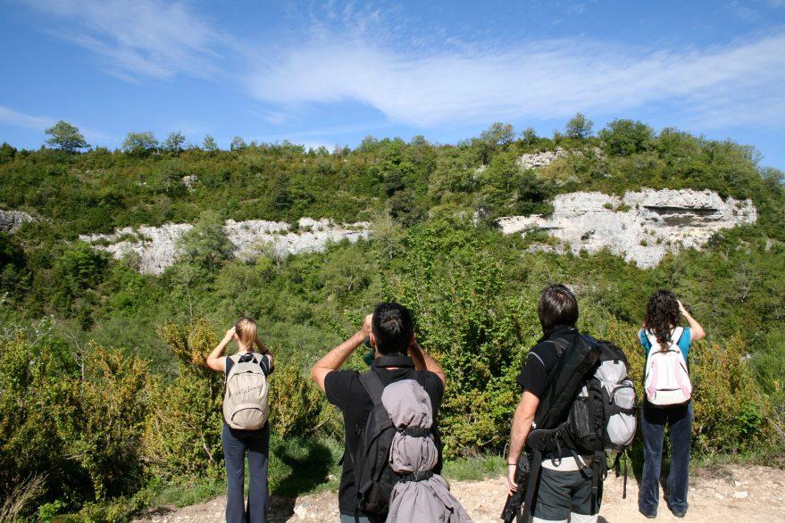 izki-observacion-aver-birdwatching
